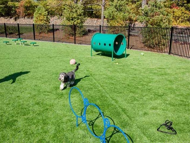 Avalon Quincy dog park